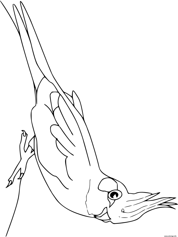 Dessin cockatiel oiseau Coloriage Gratuit à Imprimer