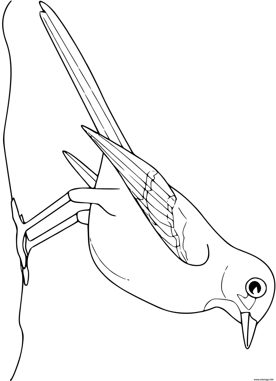 Dessin moqueur oiseau Coloriage Gratuit à Imprimer