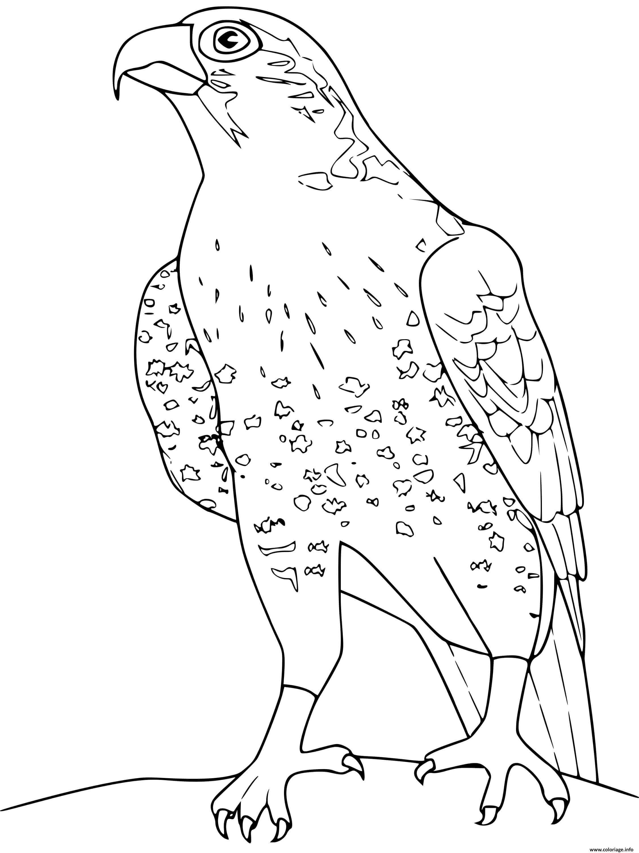 Coloriage Faucon Dessin Oiseau A Imprimer