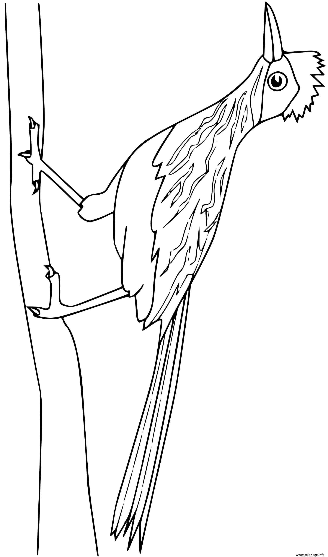 Dessin roadrunner oiseau Coloriage Gratuit à Imprimer