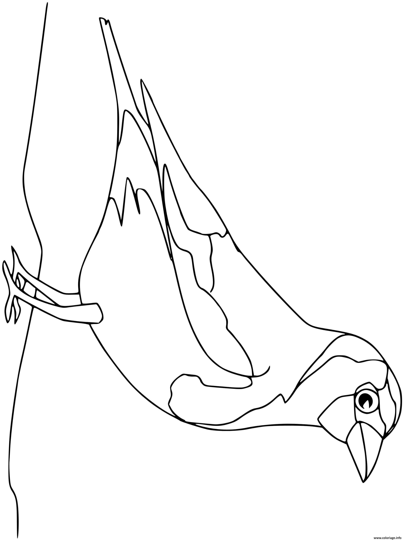 Dessin chardonneret oiseau  Coloriage Gratuit à Imprimer