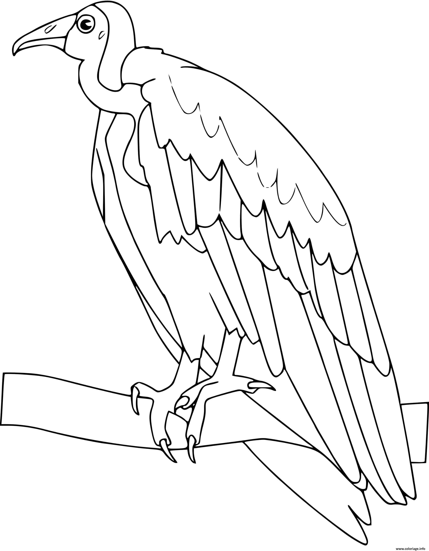 Dessin vautour Coloriage Gratuit à Imprimer