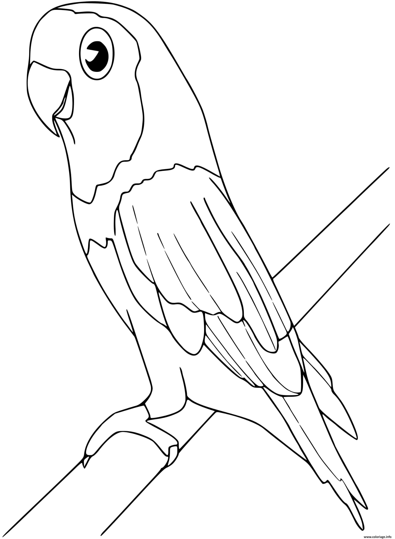 Dessin perruche oiseau Coloriage Gratuit à Imprimer
