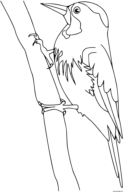 Dessin woodpecker oiseau Coloriage Gratuit à Imprimer