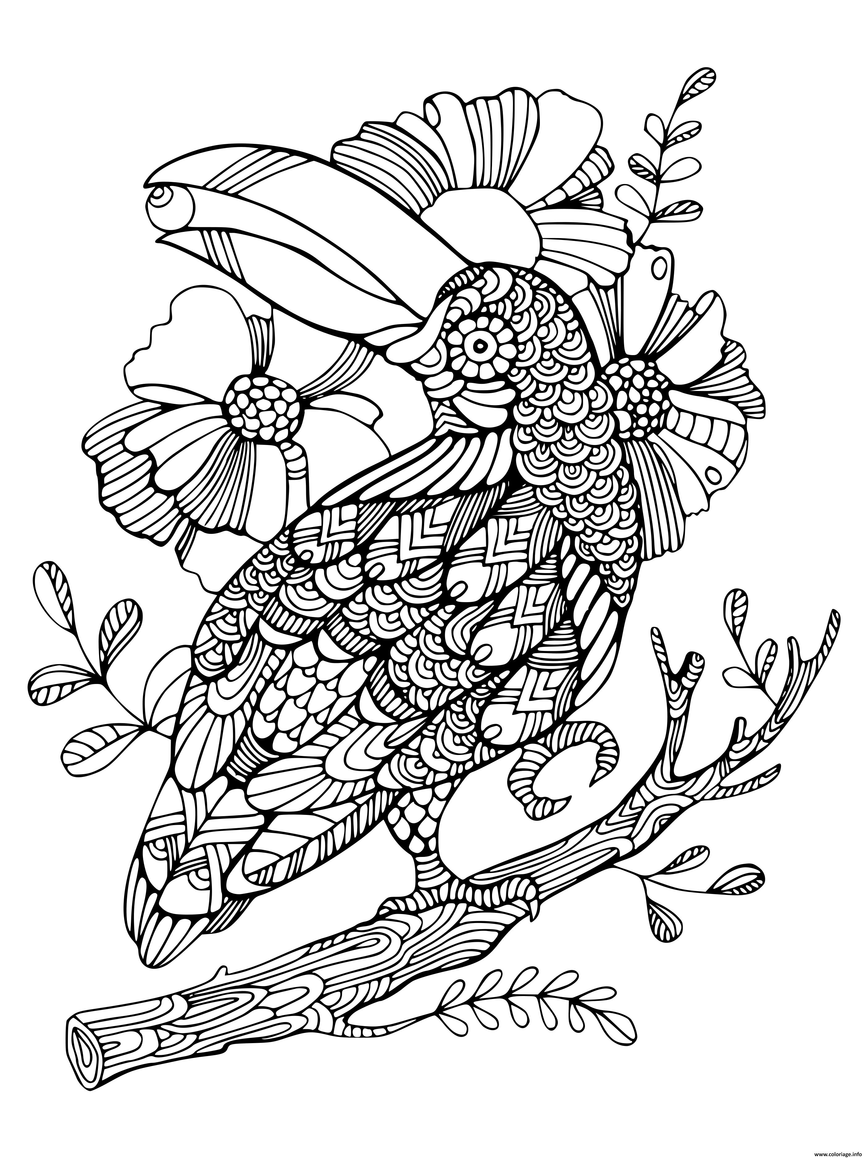 Coloriage Oiseau Mandala Toucan Zentangle Adulte Dessin ...