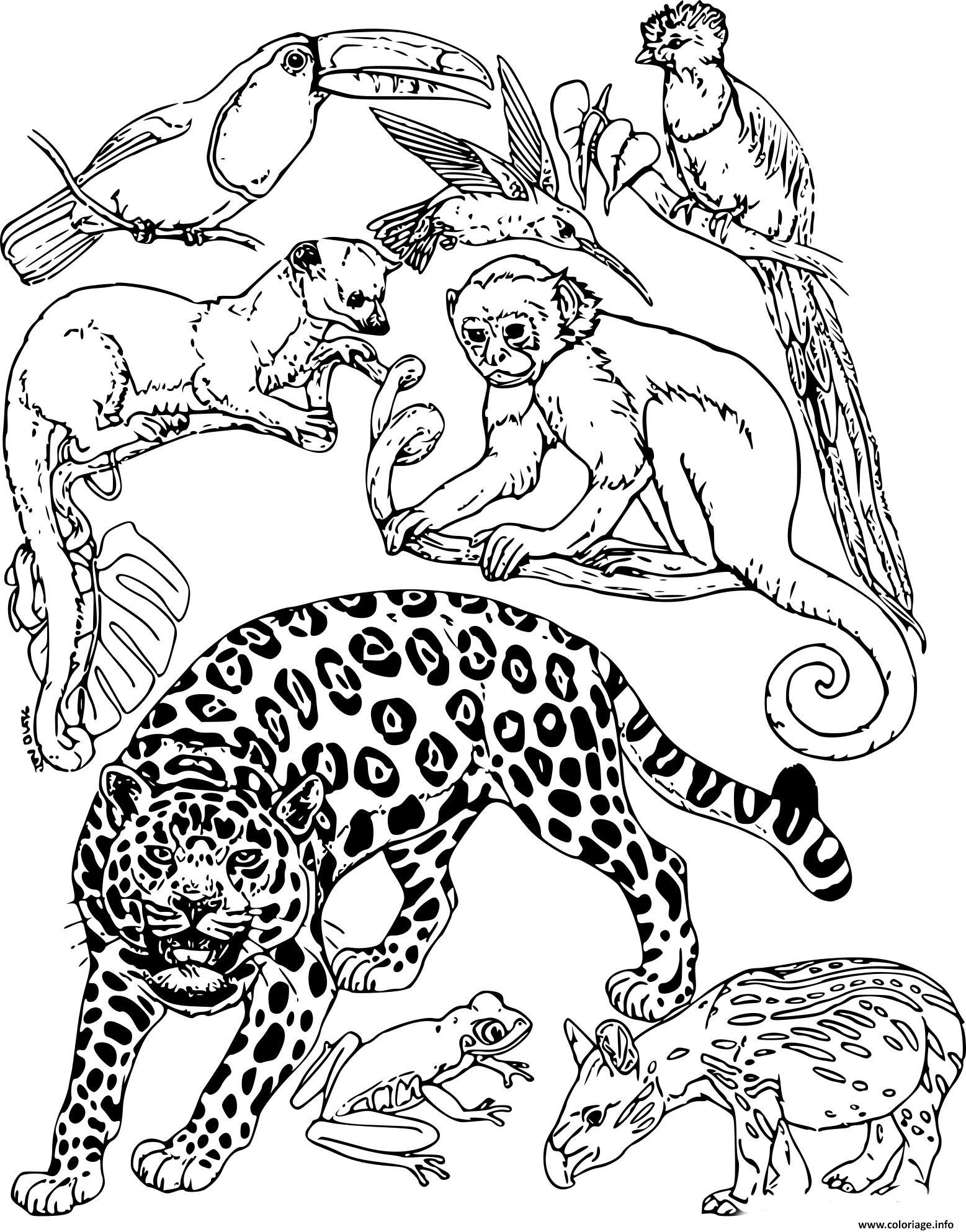 Coloriage Animaux De La Jungle Dessin Animaux De La Jungle A Imprimer