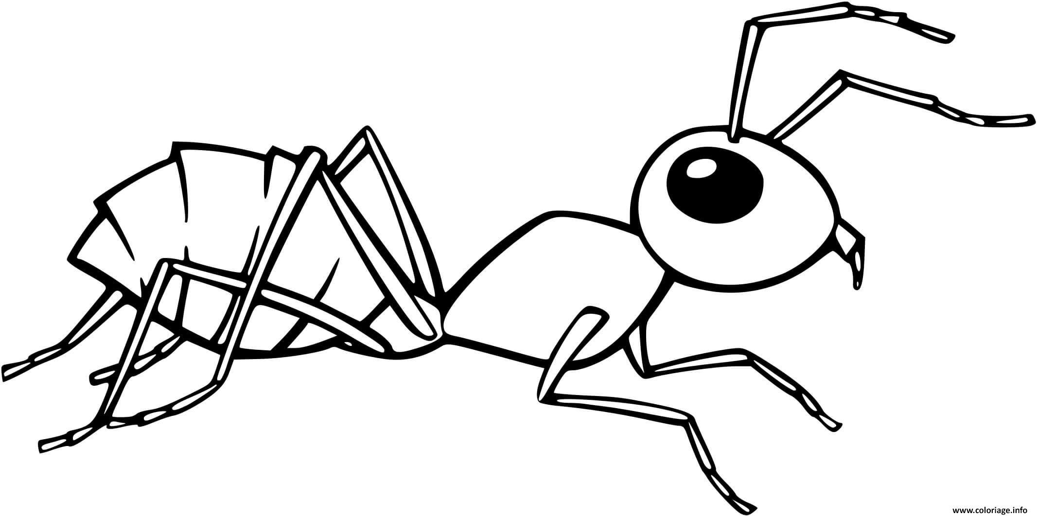 Dessin fourmi noire realiste Coloriage Gratuit à Imprimer