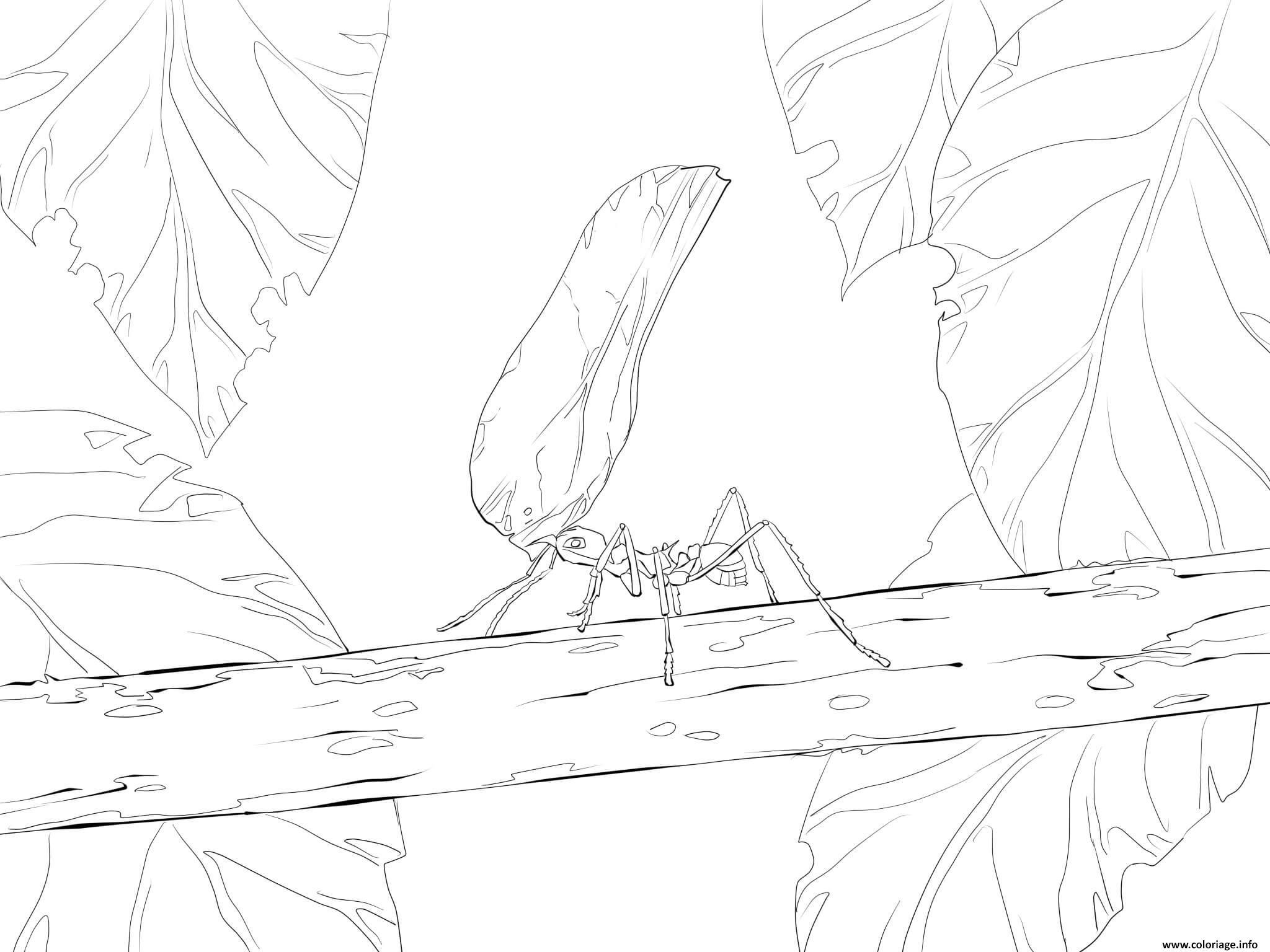 Dessin fourmi avec feuille dans la nature Coloriage Gratuit à Imprimer