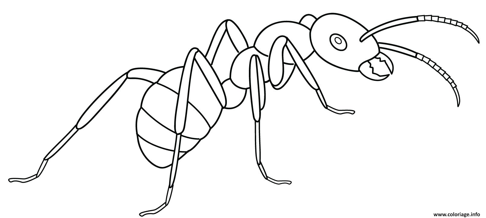 Dessin fourmi odorante dessinpar Artsashina Coloriage Gratuit à Imprimer
