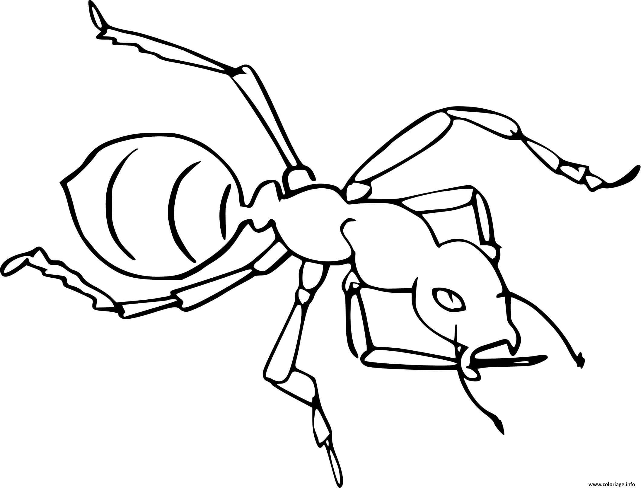 Dessin fourmi vue du haut Coloriage Gratuit à Imprimer