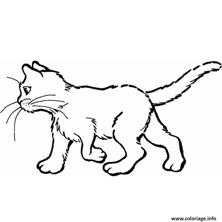 Dessin chaton facile Coloriage Gratuit à Imprimer