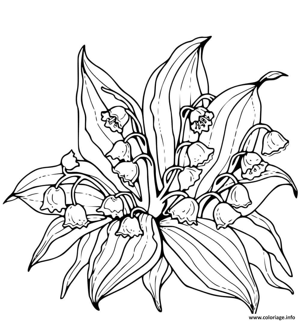 Dessin fleurs de muguet realiste Coloriage Gratuit à Imprimer