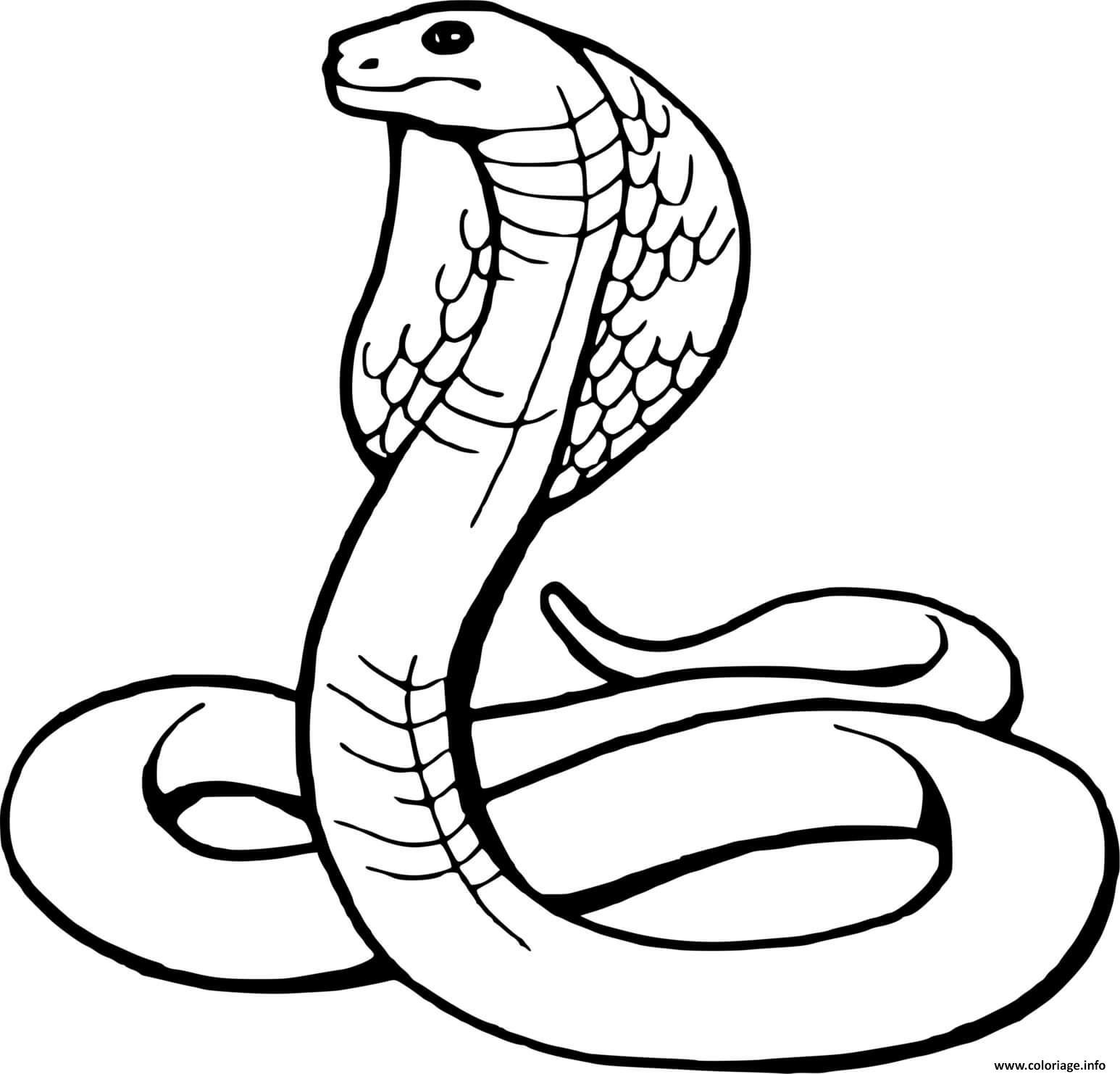 Dessin serpent snake Coloriage Gratuit à Imprimer