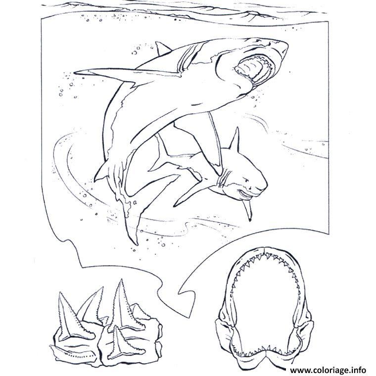 Dessin requin blanc Coloriage Gratuit à Imprimer