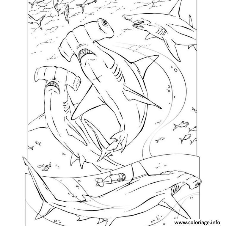 Dessin requin marteau Coloriage Gratuit à Imprimer