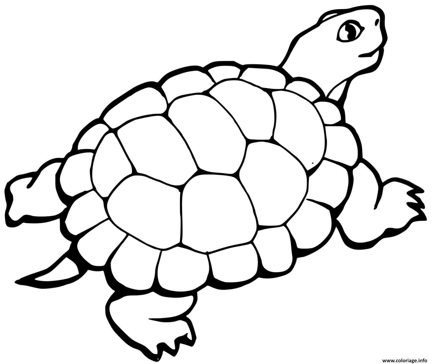 Dessin tortue avec queue Coloriage Gratuit à Imprimer