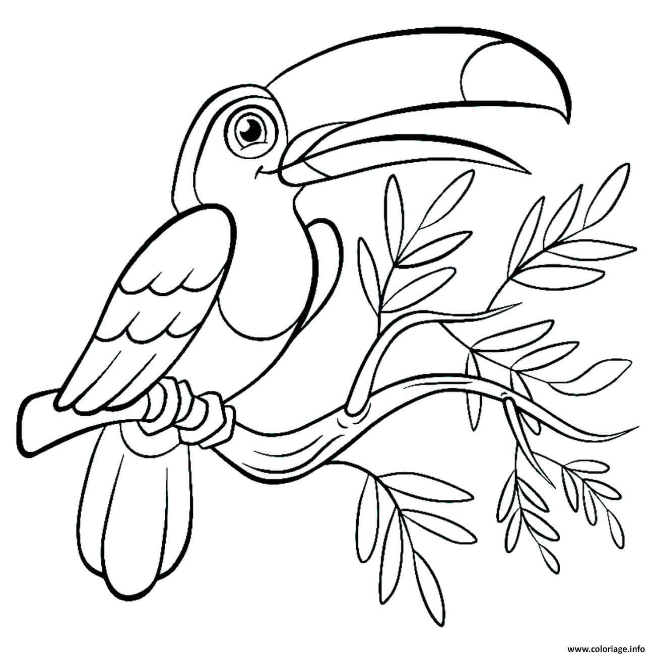 Dessin oiseau toucan toco Coloriage Gratuit à Imprimer