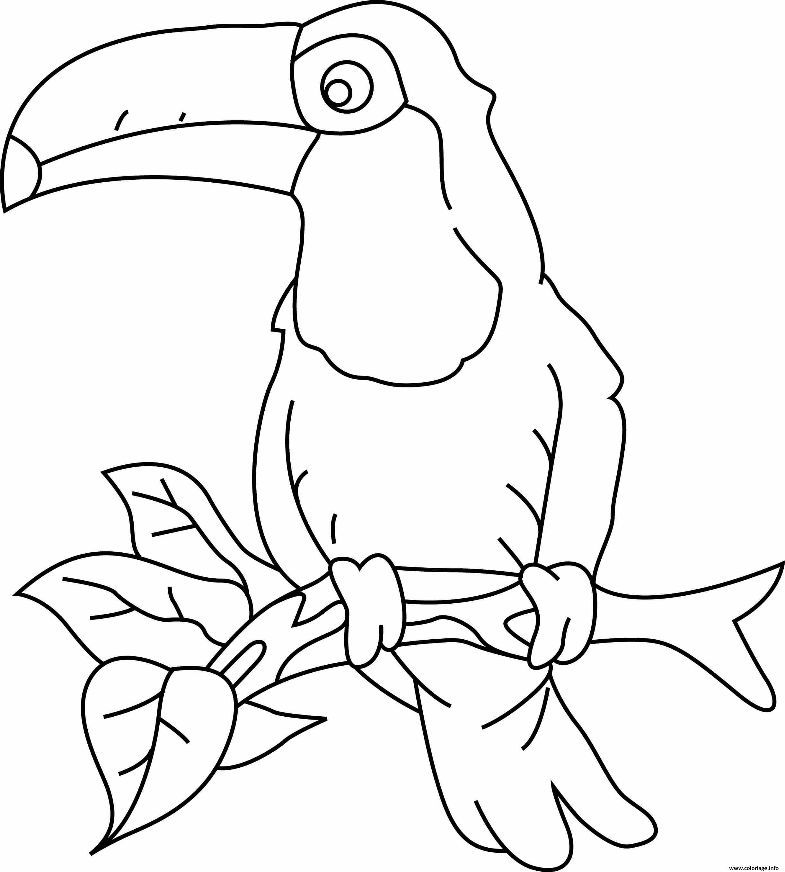 Dessin toucan avec un bec jaune et une tache noire Coloriage Gratuit à Imprimer