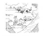 animaux australie dessin à colorier