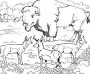 animaux du monde dessin à colorier