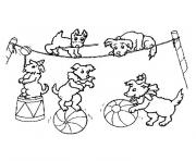 animaux cirque dessin à colorier