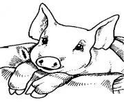 bebe cochon facile dessin à colorier