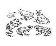 animaux tropicaux dessin à colorier