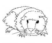 cochon d inde dessin à colorier