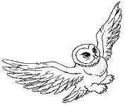 hedwige vole dessin à colorier