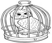 Coloriage hedwige chouette en cage
