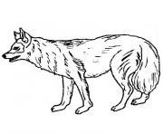 chien loup dessin à colorier