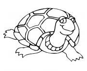 bebe tortue dessin à colorier
