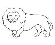 Coloriage lion majestueux