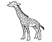 girafe dessin à colorier