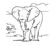 elephant d afrique dessin à colorier