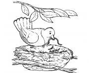oiseau nid dessin à colorier