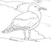 oiseaux de mer dessin à colorier