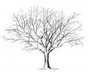 arbre 96 dessin à colorier