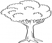 arbre 25 dessin à colorier