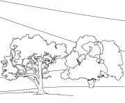 arbre 114 dessin à colorier