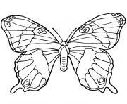 papillon dessin à colorier
