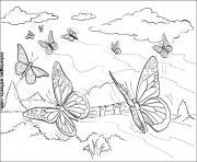papillon 248 dessin à colorier