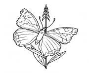 papillon belle dame dessin à colorier