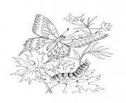 papillon 176 dessin à colorier