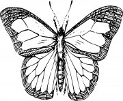 Coloriage papillon 62