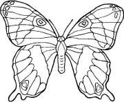 papillon 41 dessin à colorier