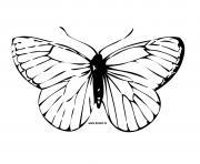 papillon 14 dessin à colorier