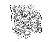 Coloriage papillon 190