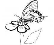 papillon fleur dessin à colorier