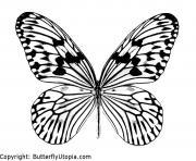 papillon 5 dessin à colorier